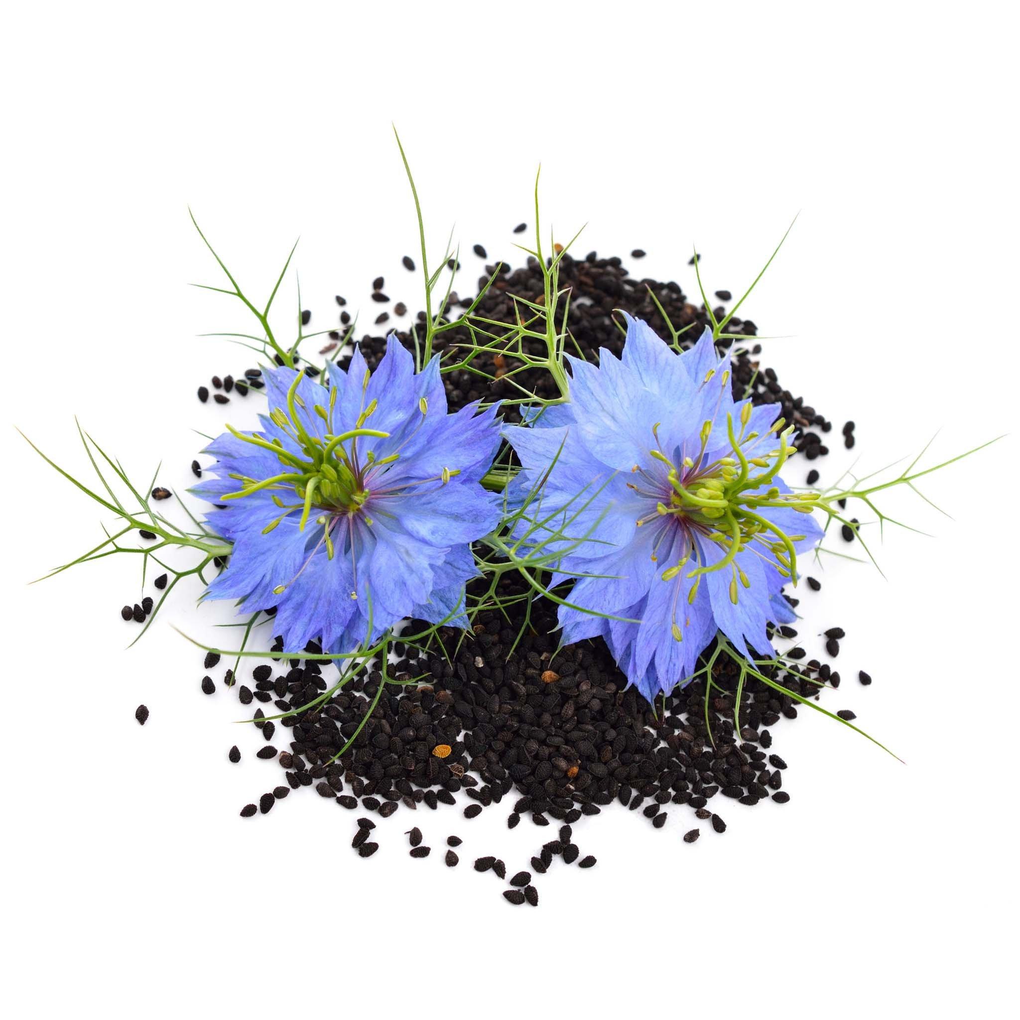 Black Cumin Oil – Secrets revealed!