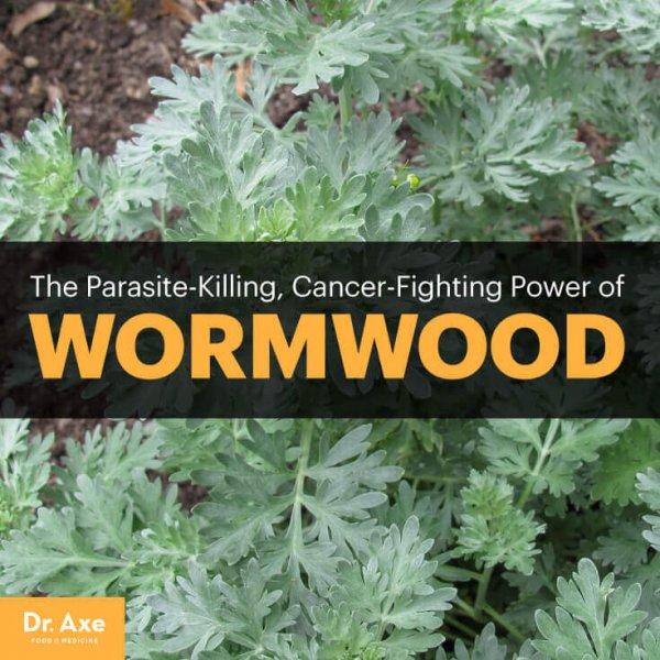 Wormwood-ArticleMeme